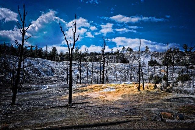 Hot Springs Eternally Bad For Trees